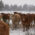 March 14th Application Deadline for TSCRA Cattle Ranchers & Landowners Disaster Relief